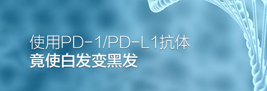 使用PD-1/PD-L1抗体竟使白发变黑发