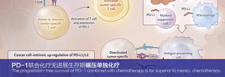 PD-1联合化疗无进展生存期碾压单独化疗