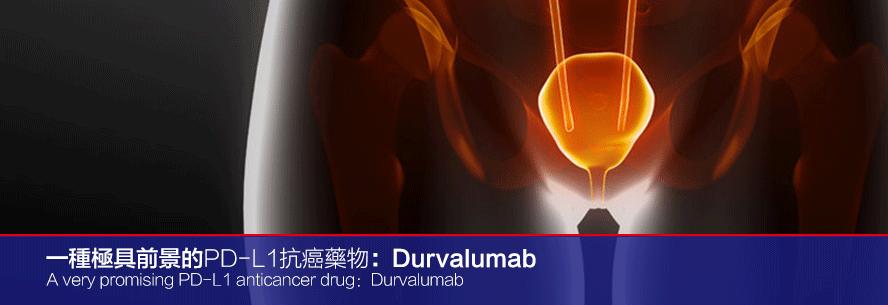 一种极具前景的PD-L1抗癌药物:Durvalumab